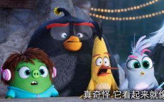 """《愤怒的小鸟2》""""猪鸟秘密会议""""片段"""