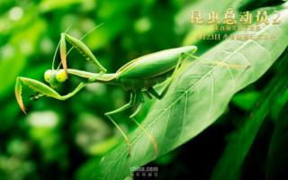 """《昆虫总动员2—来自远方的后援军》定档8月23日,与""""速激""""同步"""