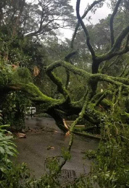 树倒了挡住路被困,天王嫂晒美照