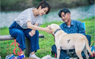 """超感人电影《小Q》预售开启,曝""""忠爱告白""""预告"""