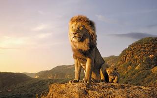 新版《狮子王》票房突破3亿,但口碑两极化