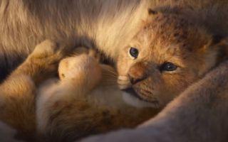 《狮子王》全新预告震撼来袭