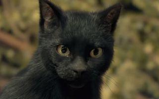 妖猫传(720P)