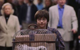 哈利穿越神奇的9¾站台? 搭上霍格沃兹的特快列车!
