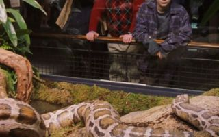 哈利波特竟然能和蟒蛇对话? 伏地魔的伏笔埋了整整八部!