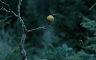 昆虫总动员2-来自远方的后援军 完整版