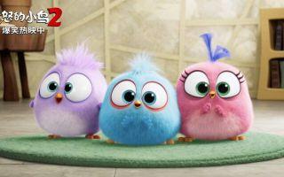 """豆瓣7.2分!《愤怒的小鸟2》曝光了""""碧昂丝彩蛋""""片段"""